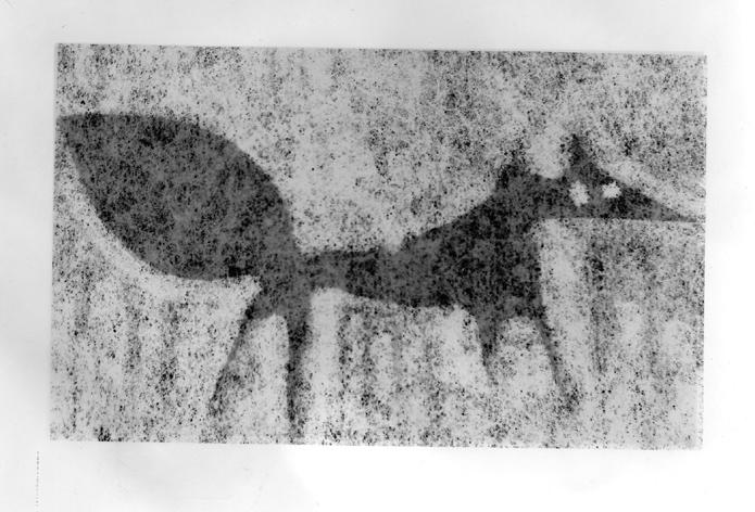 komorní liška 1