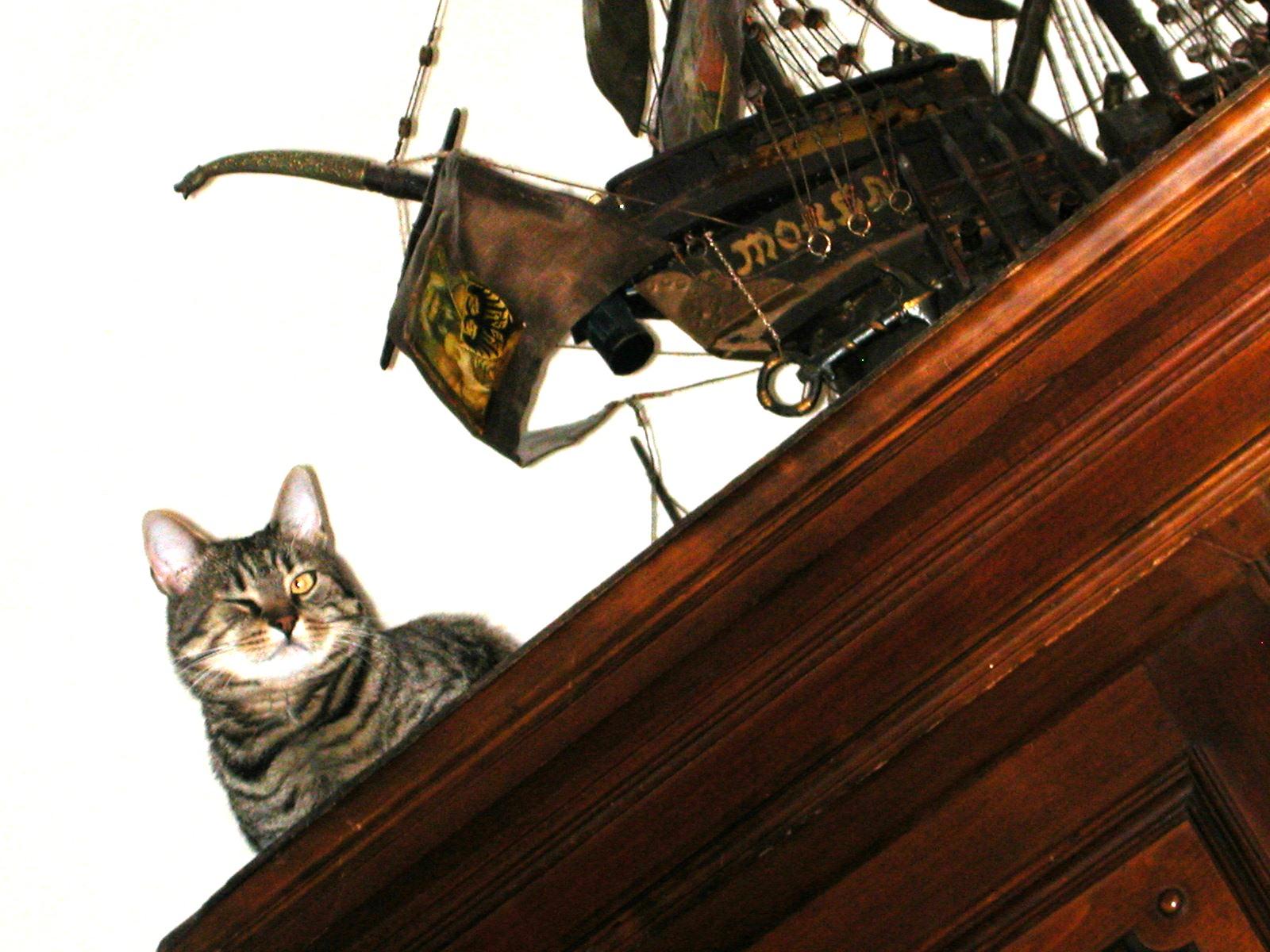 koc pirát
