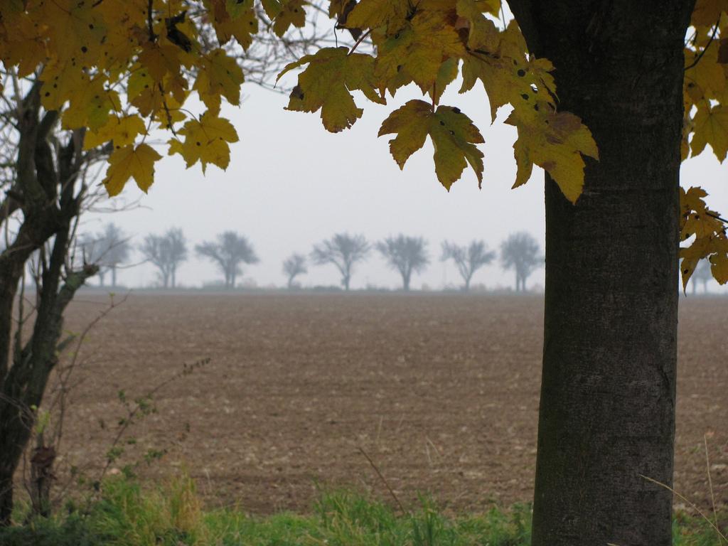 web_cesta-podzim