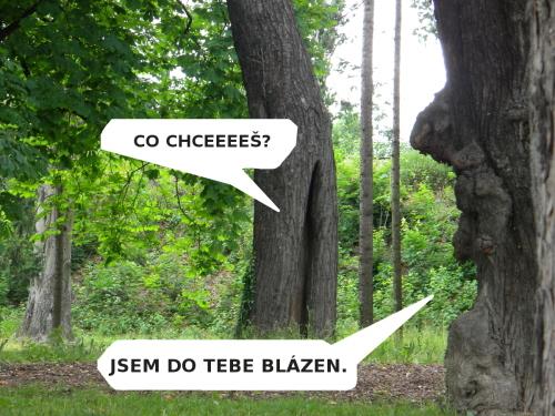 z-stromy500