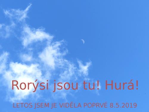 ke-rorysi2019
